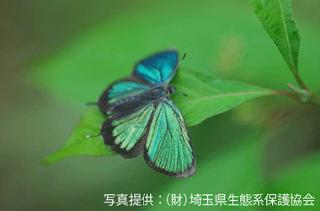 minuma_05.png